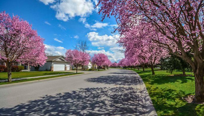Spring Neighbourhood