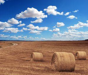 Farm Land with Hay and Blue Sky in Saskatchewan