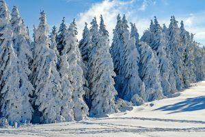 Winter Tree's in Saskatchewan