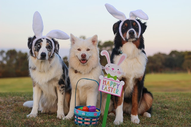 Dogs and their Easter Basket