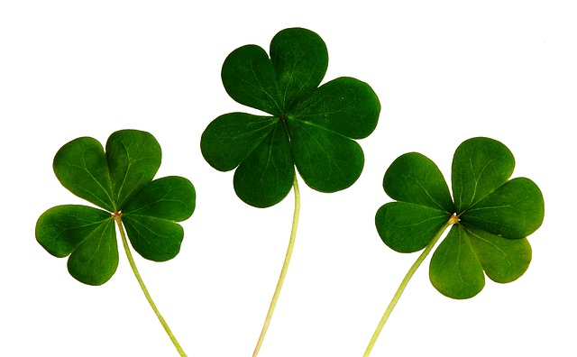 Shamrocks for a Picture Frame