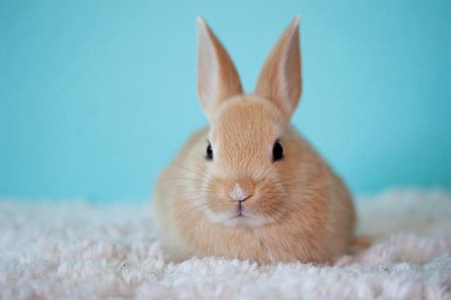 Easter Bunny in Saskatchewan